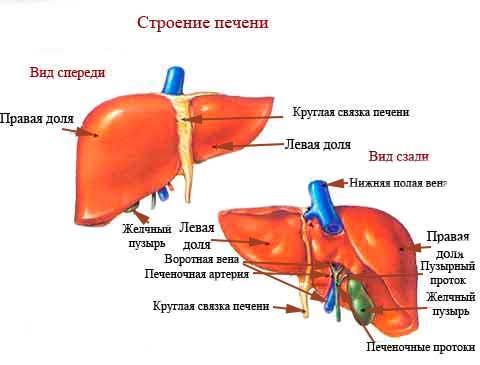 Боли в сердце неврологического характера